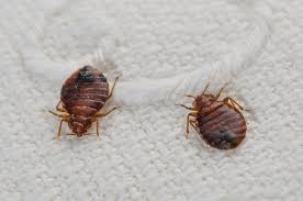 Where Do Bedbugs e From How to Get Rid of Bedbugs