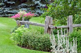 A Dilapidated Looking Wooden Fence With Rustic Barrel Planters And Green Shrubs