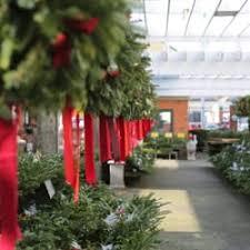 Photo Of Cedar Grove Christmas Trees