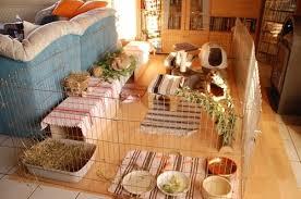 kaninchen wohnzimmer kaninchen ratgeber