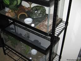 Do Baby Leopard Geckos Shed by Best Reptile Pets For Handling Beginner Pet Lizards Leopard