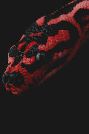 Corn Snake Shedding Too Often by 171 Best Snakes Images On Pinterest Amphibians Lizards And Animals