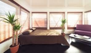 pflanzen im schlafzimmer gut oder schlecht