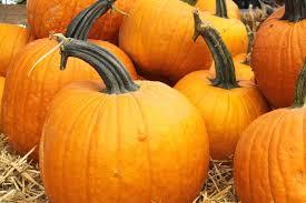 Pumpkin Patch Fayetteville Arkansas by Pumpkins U0026 Gourds Westwood Gardens