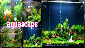 Aquascape - Android Apps On Google Play The Green Machine Aquascaping Shop Aquarium Plants Supplies Photo Collection Aquascape 219 Wallpaper F Amp 252r Of The Month October 2009 Little Hill Wallpapers Aquarium Beautify Your Home With Unique Designs Design Layout New Suitable Plants Aquariums Pinterest Pics Truly Inspired Kinds Ornamental Aquascaping Martino Agostini Timelapse Larbre En Mousse Hd Youtube Beauty Of Inside Water Garden Inspirationseekcom Grass Flowers Beautiful Background