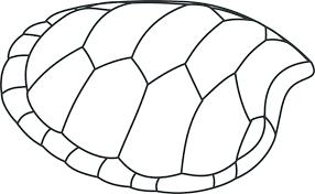 Turtle Shell Not Shedding by Turtle Shell Peeling Turtleholic