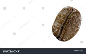 One Roasted Coffee Beans Photo Taken Close Up Background Transparent
