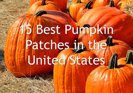 Valas Pumpkin Patch Omaha Nebraska by 15 Best Pumpkin Patches In The United States Sarah Scoop