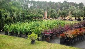 Unique Plants and Palms Garden shop