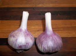 best price on gourmet seed garlic with free shipping