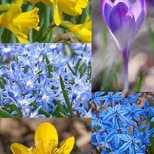 deer and rodent resistant flower bulbs at wholesale prices