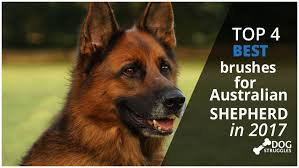 Shedding Blade German Shepherd by Top 4 Best Brushes For Australian Shepherd In 2017