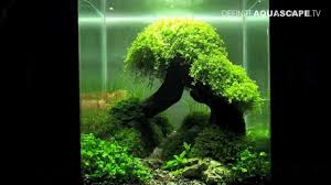 Aquascaping - The Art Of The Planted Aquarium 2012 Nano ... How To Set Up An African Cichlid Tank Step By Guide Youtube Aquascaping The Art Of The Planted Aquarium 2013 Nano Pt1 Best 25 Ideas On Pinterest Httpwwwrebellcomimagesaquascaping 430 Best Freshwater Aqua Scape Images Aquascape Equipment Setup Ideas Cool Up 17 About Fish Process 4ft Cave Ridgeline Aquascape A Planted Tank Hidden Forest New Directly After Setting When Dreams Come True