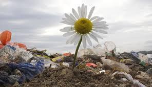 ساهموا في تنظيف بيئتنا !!!!!!!!!!!!!!!!!!! images?q=tbn:ANd9GcT