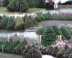 Christmas Tree Shop Near Albany Ny by Christmas Trees U2014 Albany Helping Hands