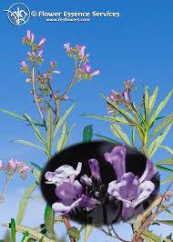 29 best Flower Essences images on Pinterest