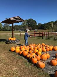 Pumpkin Patch Near Greenville Nc by Grandad U0027s Apples Hendersonville Nc Top Tips Before You Go