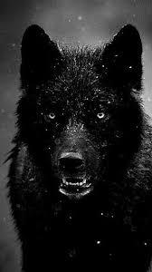 Black Wolf iPhone 6 Wallpaper