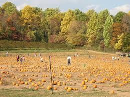 Pumpkin Picking Nj 2015 by Best 25 Pumpkin Picking Nj Ideas On Pinterest Pumpkin Patch