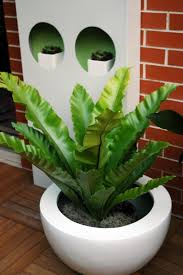 1001 ideen für zimmerpflanzen für wenig licht