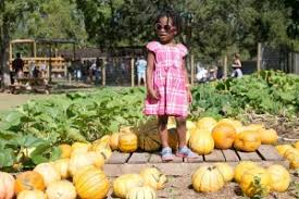 Pumpkin Patch Houston Oil Ranch by The Ultimate Fall Bucket List Houston 2015