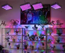 grow lights for indoor plants to create for living space