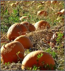 Pumpkin Patch Utah South Jordan by October 2012 Scott U0027s Place Images And Words