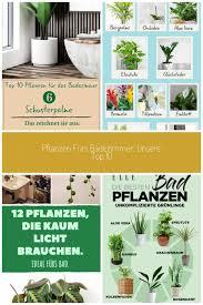 top 10 pflanzen fürs badezimmer platz 6 schusterpalm vom