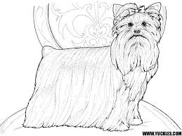Downloads Online Coloring Page Yorkie Pages 18 For Free Colouring With