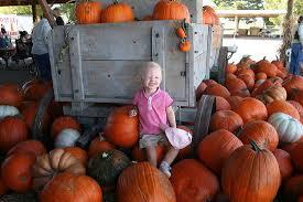 Mission Valley Pumpkin Patch by San Diego U0027s Top 5 Perfect Pumpkin Patches 10news Com Kgtv Tv San