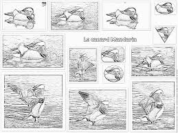 Coloring The Mandarin Duck