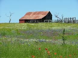 Texas Hill Country Barn In Wildflowers | Rustic Images | Foundmyself 139 Best Barns Images On Pinterest Country Barns Roads 247 Old Stone 53 Lovely 752 Life 121 In Winter Paint With Kevin Barn Youtube 180 33 Coloring Book For Adults Adult Books 118 Photo Collection