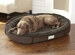 just found this tempur pedic dog bed tempur pedic wraparound dog