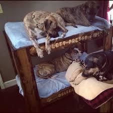Kuranda Dog Beds by Doggie Bunk Beds Dog Bunkbed Doggie Bunk Bed Bunk Beds For