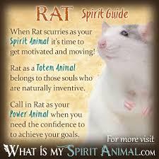 Sinked Meaning In Hindi by Rat Symbolism U0026 Meaning Spirit Totem U0026 Power Animal