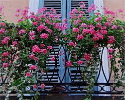 Balcony Garden O 1001 Gardens