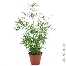 plantes vertes d interieur plantes vertes d intérieur