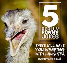100 Funny Truck Driver Jokes 5 Really Funny Jokes That Will Have You Weeping With Laughter Roy