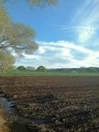 Marana Pumpkin Patch 2015 by Find Corn Mazes In Prescott Valley Mortimer Family Farms In