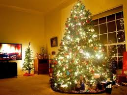 Christmas Tree Has Aphids by Your Christmas Tree Could Be Infested With Up To 25 000 Bugs