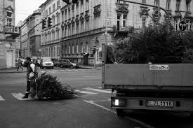Christmas Tree Disposal New York City by Warren Richardson Photography The Life Of A Christmas Tree