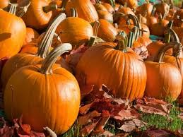 Pumpkin Patch Pasadena Area by 6 Fall Festivals Near Loudoun Ashburn Va Patch