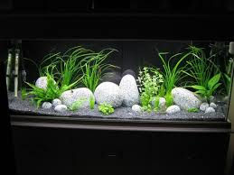 Star Wars Themed Aquarium Safe Decorations by Best 25 Aquarium Gravel Ideas On Pinterest Work Desk Decor