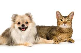 cisapride for cats ear plugs in cats animals me