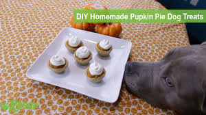 Pumpkin Pie Minecraft Id by Video Puppy Makes Diy Pumpkin Pies For Dogs And It U0027s Everything