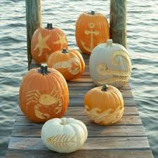 Gainesville Pumpkin Patch by Florida U0027s Best Pumpkin Patches U2013 Things Floridians Like