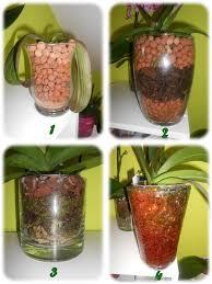 culture dans un pot en verre orchidée et cie