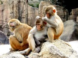 Most Beutiful Monkeys