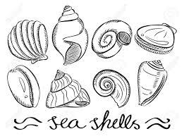 100 Sea Shell Design Drawn Design Free Clipart On Dumielauxepicesnet