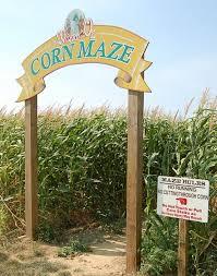 Snohomish County Pumpkin Patches by Best 25 Corn Maze Ideas On Pinterest A Maze In Corn Pumpkin